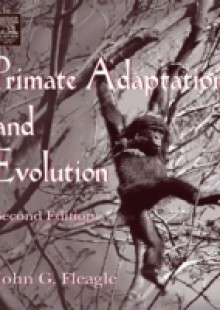 Обложка книги  - Primate Adaptation and Evolution