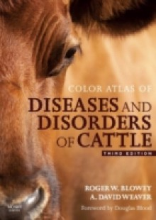 Обложка книги  - Color Atlas of Diseases and Disorders of Cattle