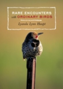 Обложка книги  - Rare Encounters with Ordinary Birds