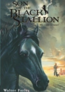 Обложка книги  - Son of the Black Stallion