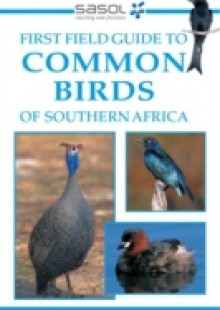 Обложка книги  - First Field Guide to Common Birds of Southern Africa